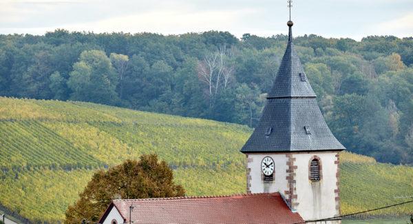 Brandhof de Steinseltz - Vin et Crémant d'Alsace - Cleebourg