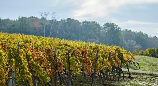 Huettgasse de Steinseltz - Vin et Crémant d'Alsace - Cleebourg