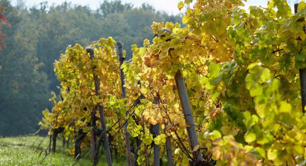 Karchweg d'Oberhoffen les Wissembourg - Vin et Crémant d'Alsace - Cleebourg