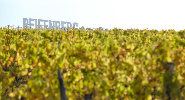 Reifenberg de Cléebourg - Vin et Crémant d'Alsace - Cleebourg
